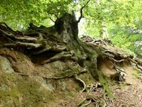 Unterholz, Schädel, Wald, Klauen