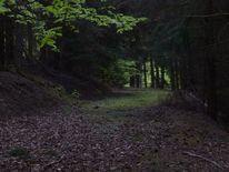 Grün, Weg, Traum, Wald