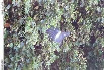 Natur, Vogel, Efeu, Pflanzen