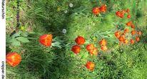 Straßenrand, Sommer, Fotografie, Tulpen