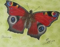 Pfauenauge, Schmetterling, Pastellmalerei, Zeichnungen
