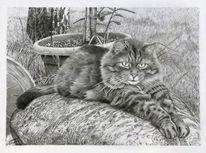 Realistische zeichnung, Katzenportrait, Bleistiftzeichnung, Katzenzeichnung