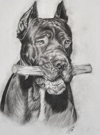 Kohlezeichnung, Cane corso, Hundezeichnung, Zeichnungen