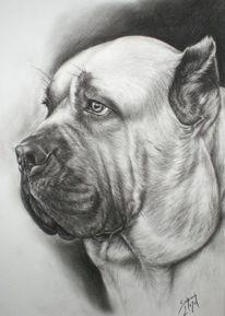 Hundezeichnung, Mastiff, Cane corso, Zeichnungen