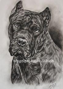 Spanische dogge, Kohlezeichnung, Dogo canario, Zeichnungen