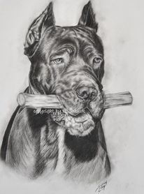 Hundezeichnung, Kohlezeichnung, Cane corso, Hund
