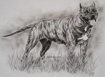 Dogo canario, Presa canario, Hundezeichnung, Zeichnungen