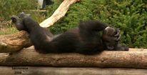 Tiere, Affe, Langeweile, Fotografie