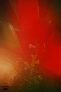 Blumenfarben, Fotografie, Pflanzen