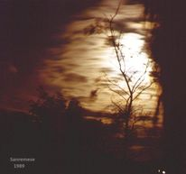 Dunkel, Feenbaeume, Mondschein, Baum