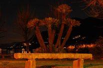 Licht, Palmen, Nacht, Lago maggiore