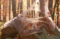 Herbst, Halloween, Herbstlicht, Fotografie