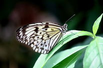 Deutschland, Sommer, Schmetterling, Insekten