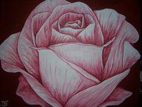 Natur, Blumen, Rose, Malerei