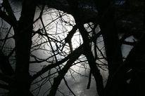 Zweig, Eis, Sonne, Höhe