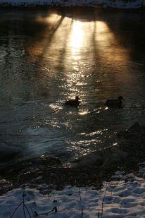 Fluss, Schnee, Ente, Spiegelung