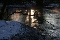 Baum, Spiegelung, Sonne, Wasser