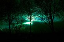 Licht, Baum, Wäler, Bewölkt