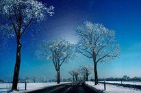 Holz, Fahrradweg, Winter, Kalt