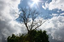 Blätter, Wolken, Sonne, Wind