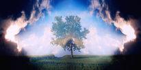 Baum, Feld, Horizont, Wolken