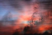 Sonne, Unbewusst, Zweig, Licht