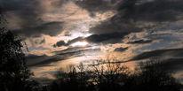 Licht, Pflanzen, Busch, Wolken