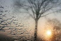 Baum, Nass, Tropfen, Fahrt