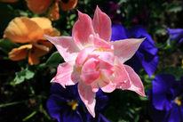 Duft, Farben, Sonnenlicht, Blumen