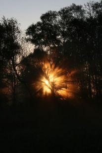 Sonne, Licht, Strahlen, Baum