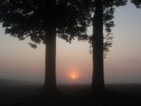 Auto, Baum, Sonnenaufgang, Wiese