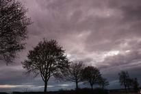 Wind, Baum, Wolken, Himmel