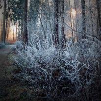 Baum, Zweig, Licht, Neujahr