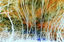 Wind, Zweig, Baum, Kühl