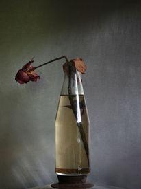Topfdeckel, Bruch, Flasche, Blumen