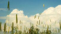 Pflanzen, Sonne, Wolken, Wind