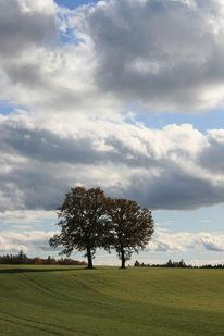Wolken, Baum, Feld, Himmel