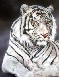 Tiger raubkatze, Pinnwand