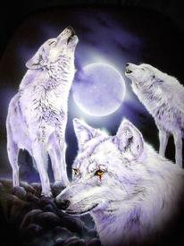 Heulende wölfe vollmond, Pinnwand