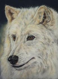Tierwelt, Malerei, Fotorealismus, Wolf
