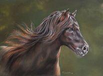 Malerei, Pferde, Schwarz, Pastellmalerei