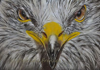 Wildtier, Tierportrait, Raubvogel, Tier malerei