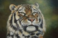 Tierwelt, Fotorealismus, Tiger, Großkatze