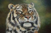 Fotorealismus, Tiger, Großkatze, Ölmalerei