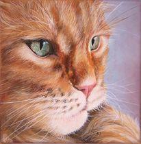 Katze, Tiere, Maine coon, Malerei