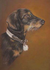 Teckel, Haustier, Hund, Fotorealismus