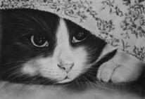 Kohlezeichnung, Schwarz, Fotorealismus, Katze