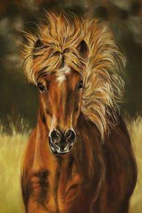 Fotorealismus, Tiere, Malerei, Pferde