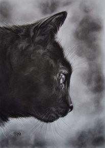 Schwarz, Katze, Tiere, Kohlezeichnung