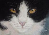 Pastellmalerei, Tuxedokatze, Fotorealismus, Katze